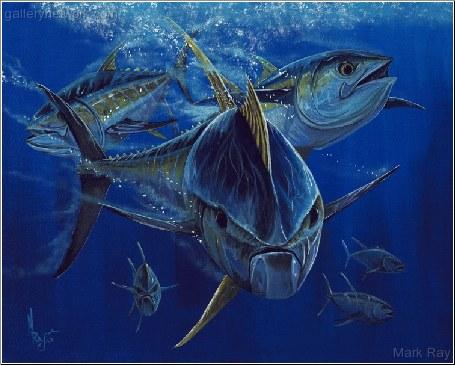Mad Yellowfin