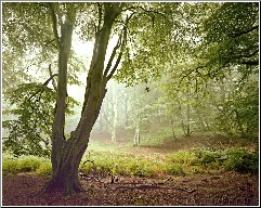 Majestic Woodland