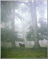 Woodland Mystique