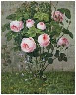 The Rose Bush