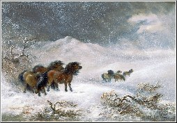 Welsh Ponies In the Snow