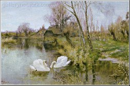 Swans by the Riverbank