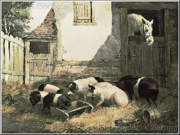 A Family of Pigs