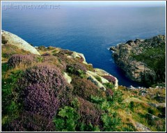 Cornwall heather cliff